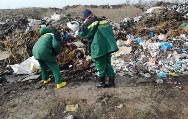 Выезд сотрудников филиала ЦЛАТИ по Краснодарскому краю на внеплановую проверку для участия в отборе проб почвы на несанкционированной свалке мусора различного типа в ст. Новощербиновской.